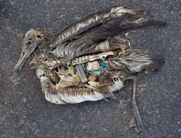 THE CURRENT GLOBAL RUBBISH SITUATION